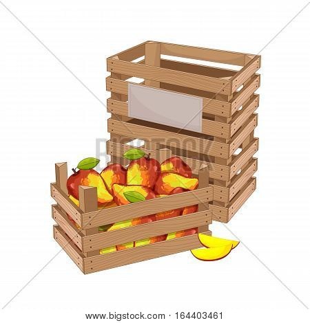 Wooden box full of mango isolated on white background vector illustration. Fresh fruit, organic farming, vegan food, delivery farm product, grocery store concept. Ripe mango in wooden crate icon.