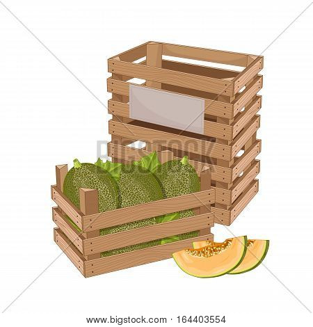 Wooden box full of melon isolated on white background vector illustration. Fresh fruit, organic farming, vegan food, delivery farm product, grocery store concept. Ripe melon in wooden crate icon.
