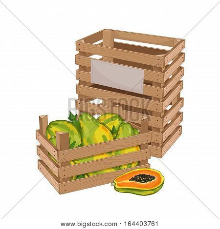 Wooden box full of papaya isolated on white background vector illustration. Fresh fruit, organic farming, vegan food, delivery farm product, grocery store concept. Ripe papaya in wooden crate icon.