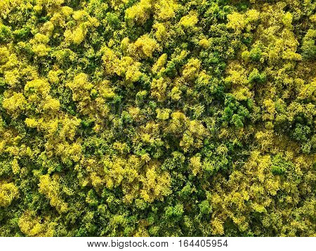 Green and Yellow moss background texture element