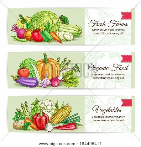 Fresh vegetables banner set. Organic farm veggies label with tomato, carrot and pepper, onion and chilli, broccoli and eggplant, potato and garlic, beet, cabbage, pumpkin. Food packaging, farm market design
