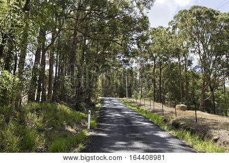 View of a typical country road flanked by tall gum trees near Yandina Queensland Australia