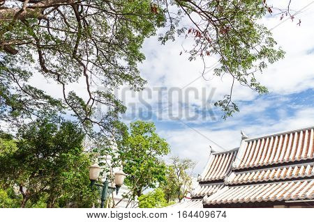 Sky, trees and roofs The bright atmosphere