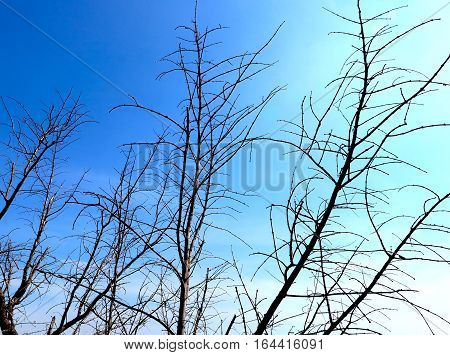 Branch silhouette on bule sky background in daytime