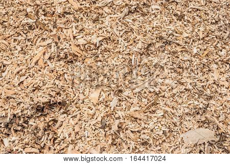 Pile of Wood Flakes Background / Texture