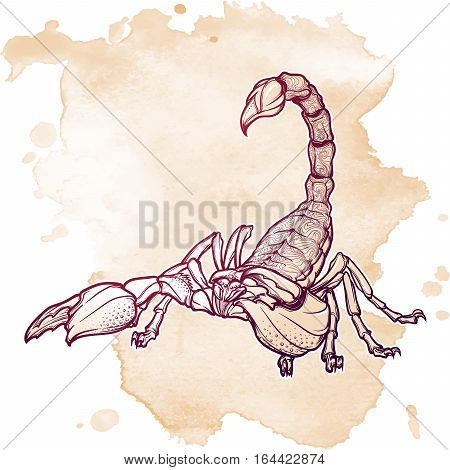 Detailed realistic scorpio drawing on grunge background. Decorative ornament on the creature back. Tattoo design, zodiac sign concept art, horoscope article illustration. EPS10 vector illustration.
