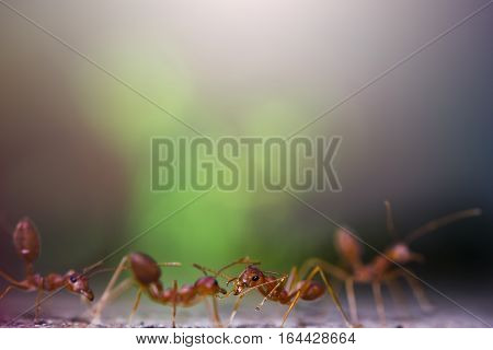 Portrait of the ants with bokeh background and morning light