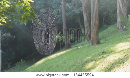 Spider Sitting On A Spider Webin The Forest