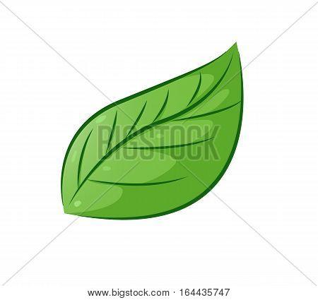 Aesthetic Leaf Cartoon Isolated on White. Vector Illustration.