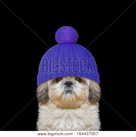 winter dog in a wool hat -- isolated on black