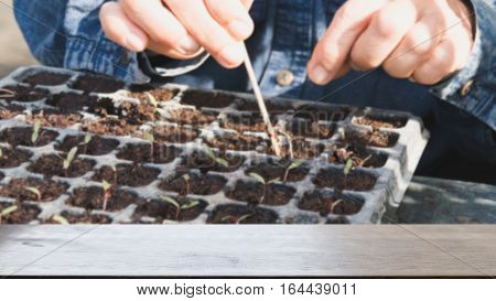Plant Seedling In The Vegetable Plot (blur Image) With Selected Focus Empty Wood Table For Display Y