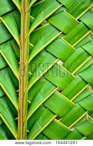 Weaving fresh green coconut leaves texture background