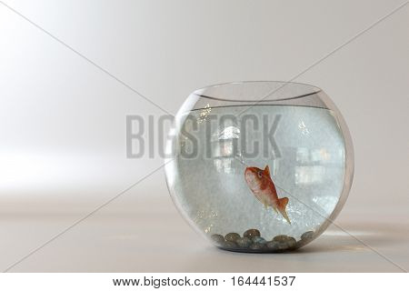 Goldfish into a fishbowl isolated on white background