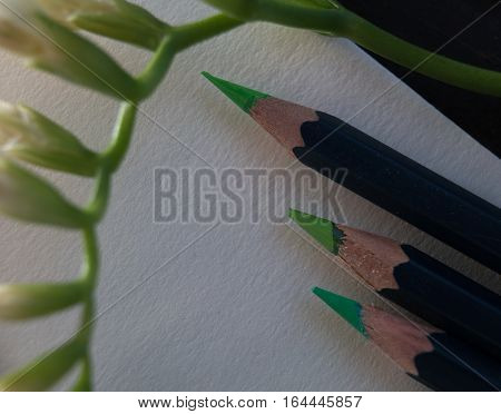 set of green pencils and freesia branch on white paper . close-up