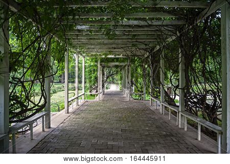Wooden arbour covered with lianas in park