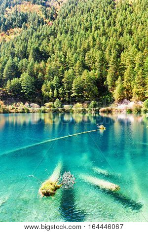 Fantastic Azure Water Of Lake With Submerged Tree Trunks
