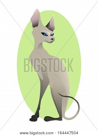Portrait of young Sphynx cat with blue eyes on green oval frame