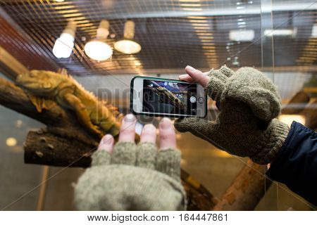 Male taking picture of iguana in zoo with smart phone