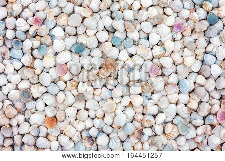 Natural background of small white and colorful sea shells
