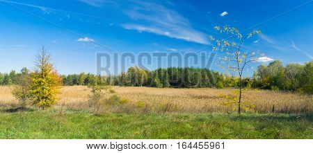 Panoramic landscape - fall in edge of a forest in Ukraine.