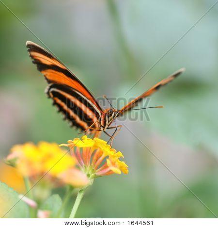 Schmetterling auf gelbe Blume