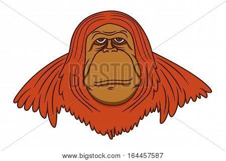 Wild Orangutan Cartoon Animal Character. Vector Illustration.
