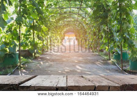 Gourd, Calabash Gourd, Flowered Gourd, Fruit And Trees In The Garden (blur Image) With Selected Focu