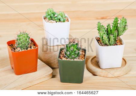 Different succulents and cactus in pots on wooden background.