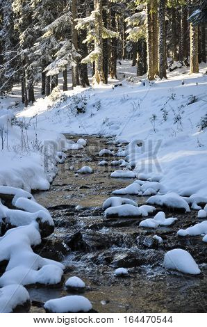 Winter in the mountain forest with trees and fresh snow
