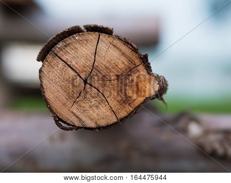 Closeup of round wood crosscut in side view
