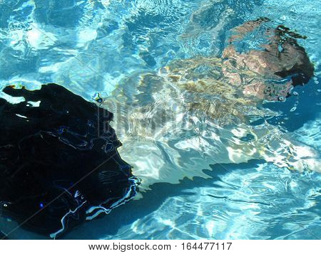 swimming under water in a swimming pool during the summer time