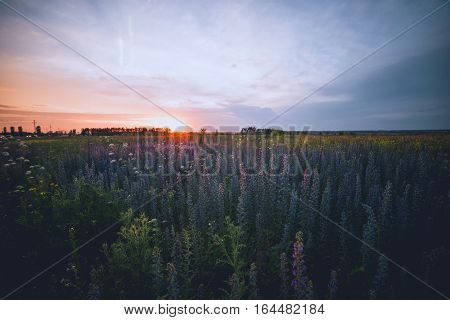 Mauve flowers on a background of beautiful sunset
