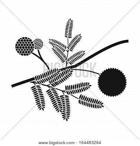 Yellow mimosa flower icon in black design isolated on white background. Australia symbol stock vector illustration.