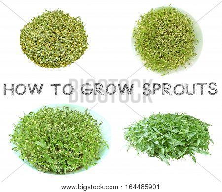 Learn how to grow sprouts at home top view Third step picture for agriculture examples How to knowledge and learning Photo is isolate on white background has free hand draw font.
