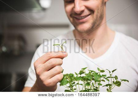 Small Piece Of Lemon Balm