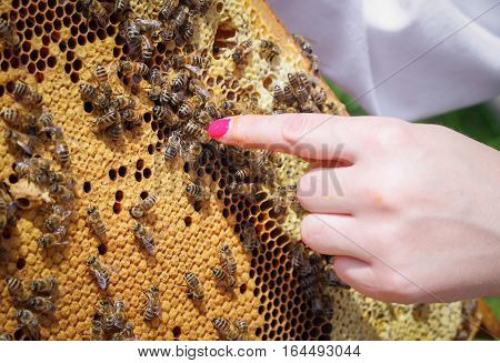 Honeycomb with a lot of bees. Hand of woman beekeeper