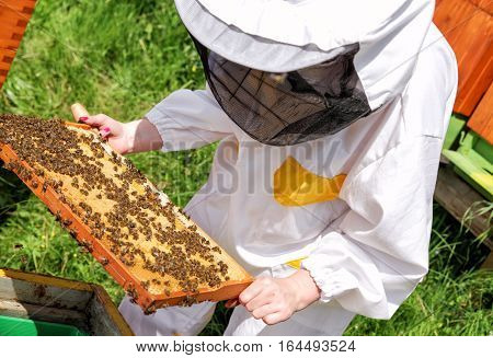 Woman beekeeper in white worksuite with bees