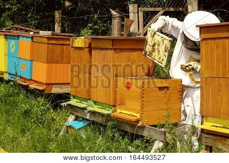 Beekeeper in white worksuite near beehives with bees