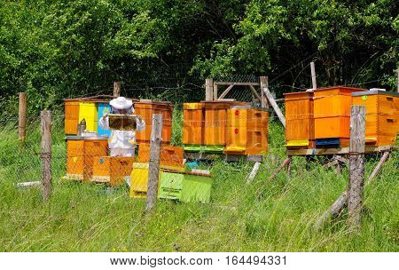 Beekeeper near beehives with bees in country