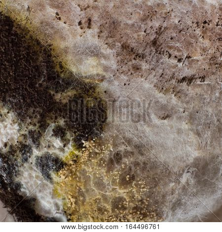 surface of the food product. It is covered with mold. Macro