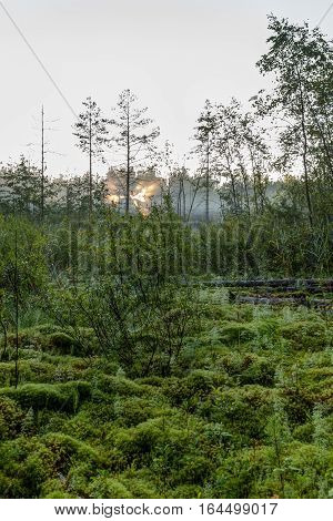 Dawn on the swamp in the forest