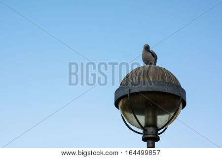 Silhouette of a seagull standing still on the top of a lamppost