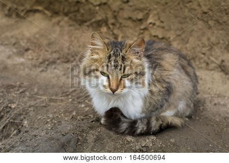 Stray cat sitting on the ground with lot of dust