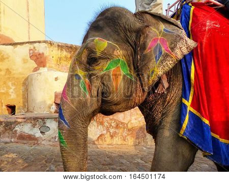 Portrait of painted elephant walking up to Amber Fort near Jaipur Rajasthan India. Elephant rides are popular tourist attraction in Amber Fort.
