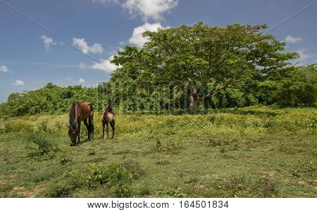 A horse with a foal is grazing on a grassy field.