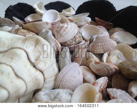 Sea shells with different textures and tonality