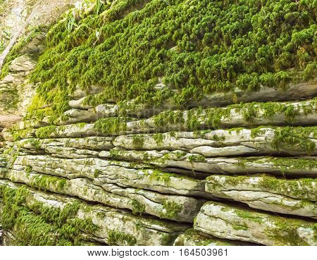 Wall stone labyrinth on the site of the fault after the earthquake. Sochi the yew-boxwood grove