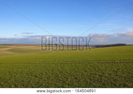 Winter Wheat Fields