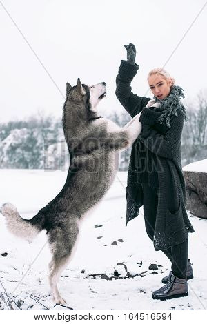 Girl with big malamute dog on winter background. Dog stands on its hind legs and stretches to girl's hand.