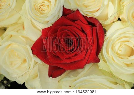 Single red rose in a white rose wedding bouquet